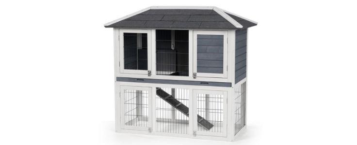 Rabbit Home Image