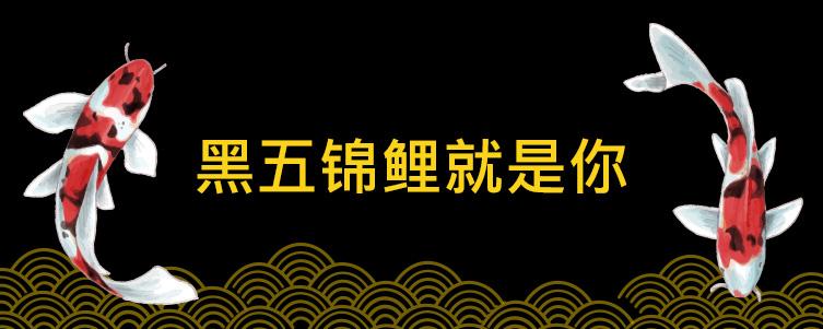 2018黑五锦鲤抽奖活动