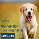 Canine Sciences, LLC Square Logo
